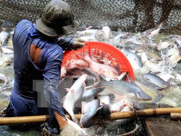 Aumentan exportaciones de productos agroforestales y acuaticos de Vietnam hinh anh 1