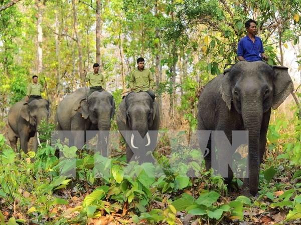 Vietnam lanza Semana de proteccion de elefantes hinh anh 1