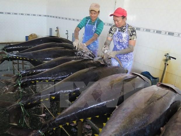 Ligero aumento en exportacion vietnamita de atun hinh anh 1