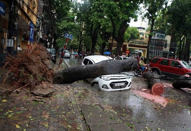 Exhortan en Vietnam a mejorar pronostico de tormentas hinh anh 1
