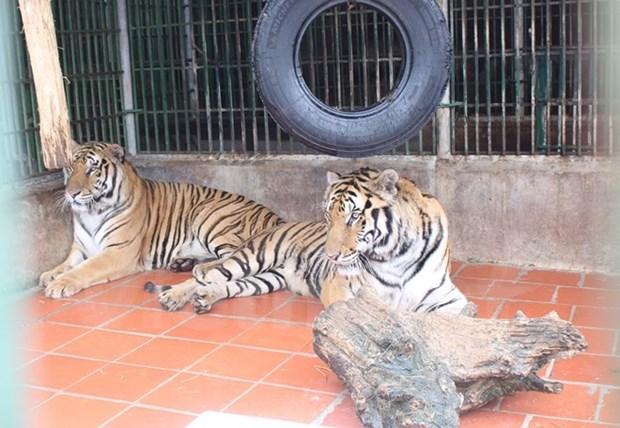Liberan a animales exoticos a su habitat natural en parque Phong Nha- Ke Bang hinh anh 1