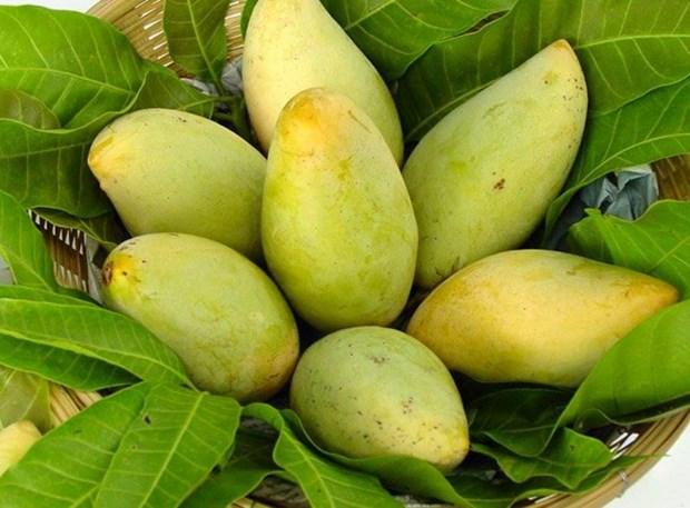 Mango fresco de Vietnam podra penetrar en mercado estadounidense hinh anh 1