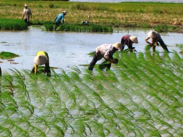 Provincia de KonTum aboga por reestructuracion agricola para el desarrollo hinh anh 1