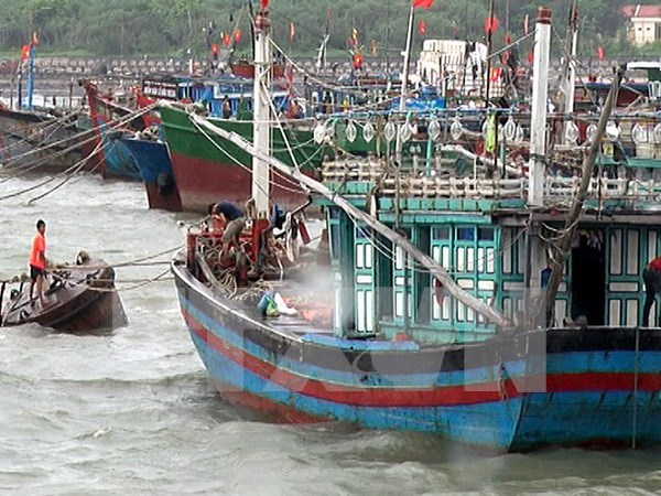 Vicepremier orienta labor de prevencion contra tifon en Quang Ninh hinh anh 1