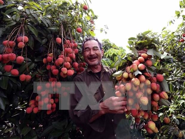 Abrir entrada de frutas en mercado australiano, exito de negociadores vietnamitas hinh anh 1
