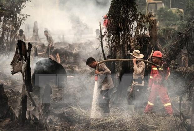 Indonesia registra 65 zonas en peligro de incendios forestales hinh anh 1