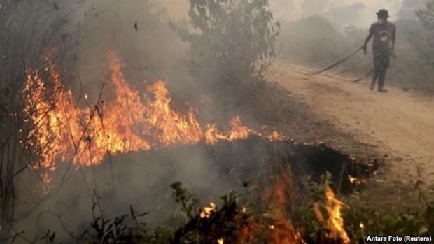 Indonesia declara estado de emergencia por incendios forestales hinh anh 1
