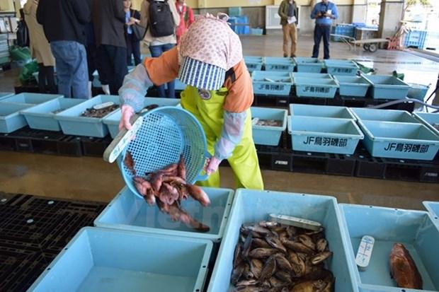 Exportadores de mariscos de Japon entran en mercado vietnamita hinh anh 1