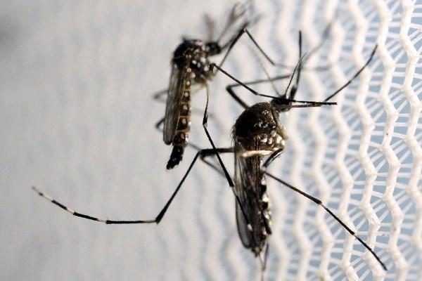 Malasia instala trampas solares de mosquitos para prevenir el Zika hinh anh 1