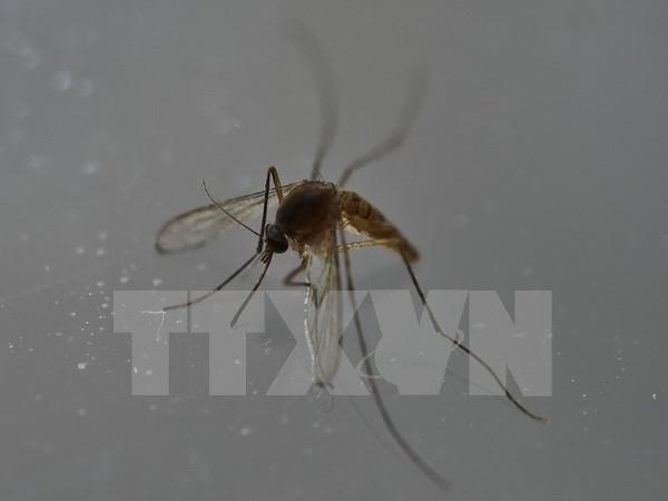 Tailandia, Singapur y Filipinas confirman nuevos casos de Zika hinh anh 1