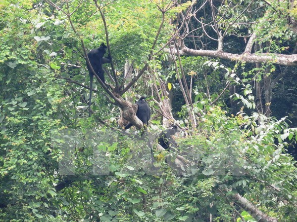 Rescatan exitosamente oso y monos en provincia de Vietnam hinh anh 1