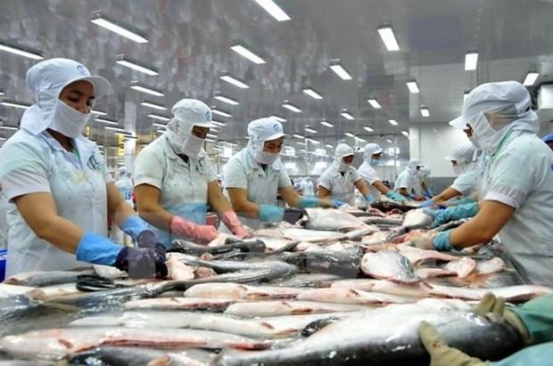 Nuevo reglamento para exportadoras de bagres de Vietnam a EE.UU. hinh anh 1