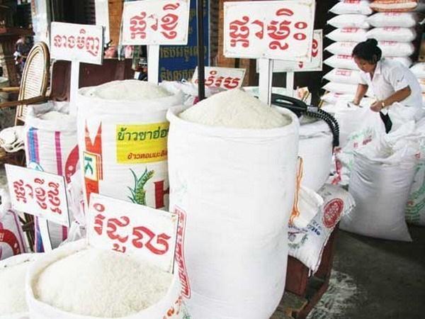 Camboya se esfuerza para estabilizar el precio del arroz hinh anh 1