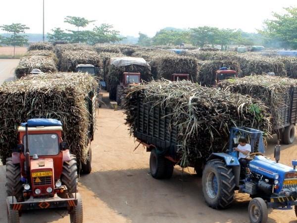 Tailandia revisa su politica de produccion y distribucion de azucar hinh anh 1