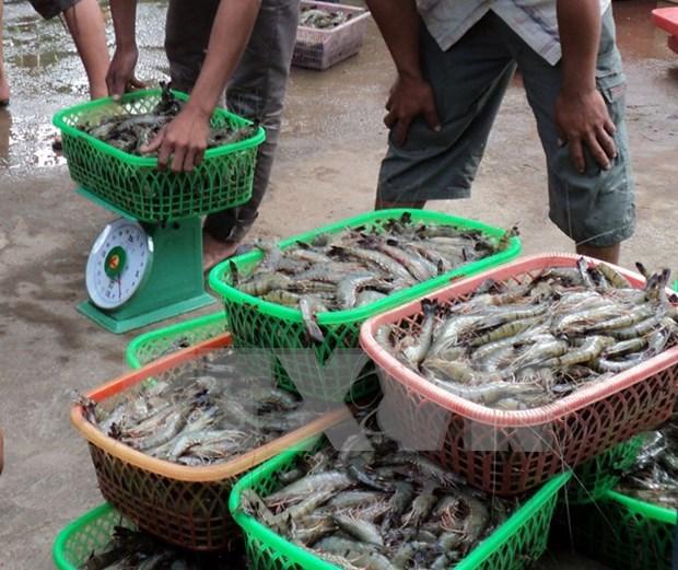 Es seguro consumir productos acuicolas de plataforma continental de Vietnam hinh anh 1