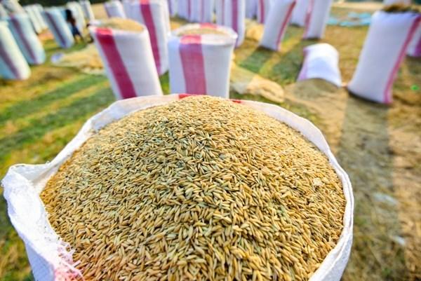 Amplia Camboya capacidades de almacenaje y secado de arroz hinh anh 1