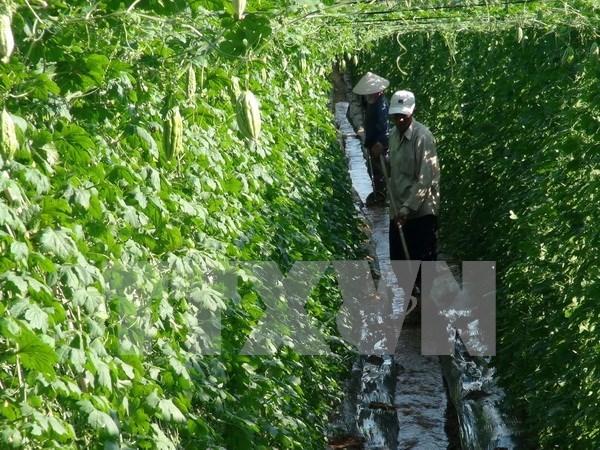 Invierte empresa nipona en proyecto de verduras limpias en Vietnam hinh anh 1