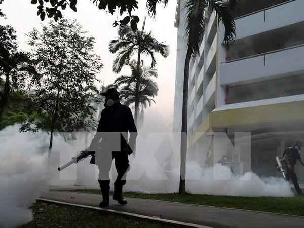 Singapur confirma 16 embarazadas infectadas por Zika hinh anh 1