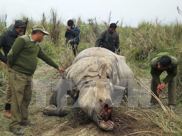 Asiste Vietnam a conferencia de CITES en Sudafrica hinh anh 1