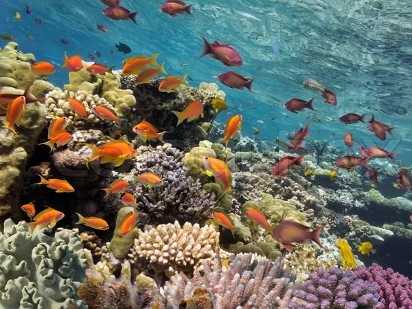 Recuperan arrecifes de coral en provincia central de Vietnam hinh anh 1