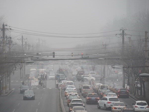 OMS: El ser humano esta amenazado por la contaminacion ambiental hinh anh 1