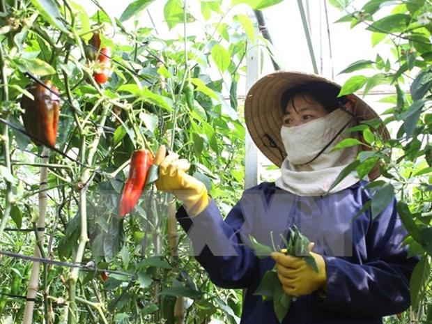 Empresas de Vietnam y Japon cooperan en desarrollo agricola hinh anh 1