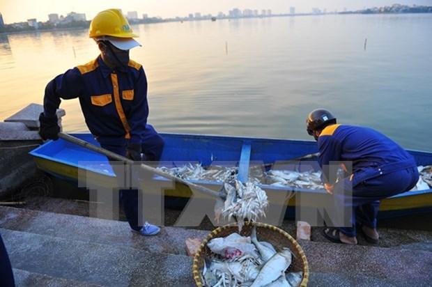 Muerte masiva de peces en lago de Hanoi por falta de oxigeno en agua hinh anh 1