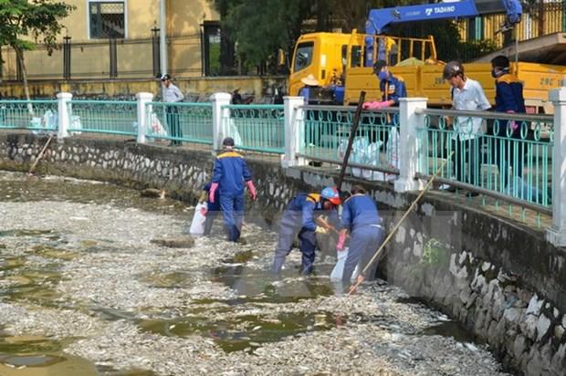 Exhortan a clarificar causa de muerte masiva de peces en lago de Hanoi hinh anh 1