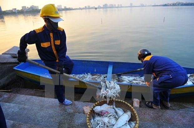 Policia y cientificos participan en investigacion de muerte masiva de peces en Hanoi hinh anh 1