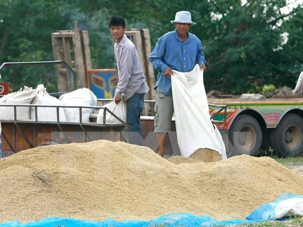 Disminuyen exportaciones arroceras de Camboya hinh anh 1