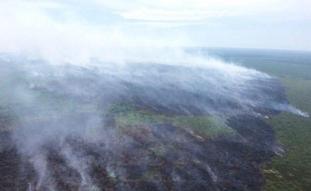 Incendio de turberas en Indonesia hinh anh 1