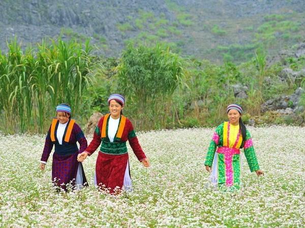 Interesados visitantes en festival de flores de alforfon en provincia de Vietnam hinh anh 1