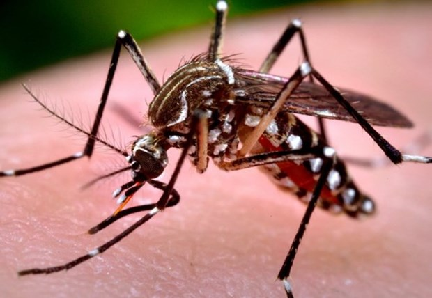 Hanoi refuerza medidas preventivas contra el Zika hinh anh 1