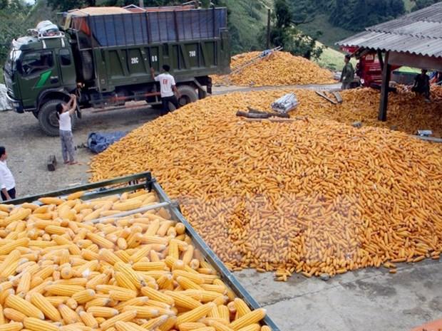 Vietnam suspende importacion de granos de EE.UU. y cacahuetes de Sudan y Hongkong hinh anh 1