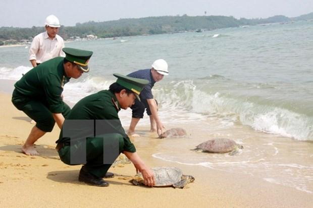 Interceptan carga ilicita de tortugas en provincia survietnamita hinh anh 1