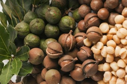 Impulsan cooperacion asociaciones de macadamia de Vietnam y Australia hinh anh 1