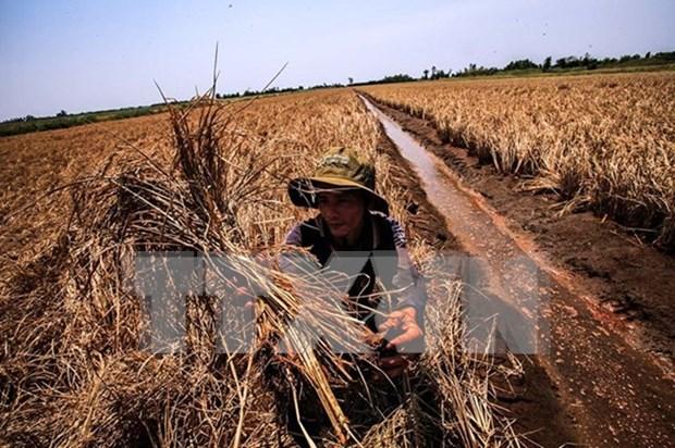 Vietnam y contrapartes de desarrollo dialogan sobre cambio climatico hinh anh 1