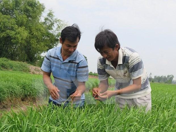Promueven en localidades vietnamitas economia verde hinh anh 1