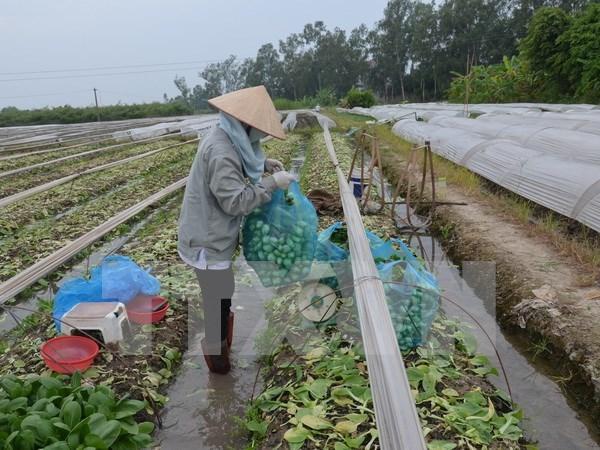 Honran en Vietnam a cooperativas y agricultores destacados en 2016 hinh anh 1