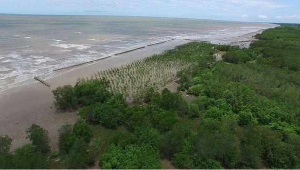 Provincia de Vietnam intensifica proteccion forestal hinh anh 1