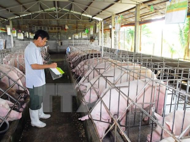 JICA asiste a la conservacion de razas autoctonas de cerdo de Vietnam hinh anh 1