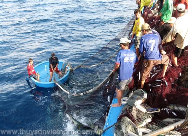 Provincia de Vietnam aumenta apoyo financiero a pescadores hinh anh 1