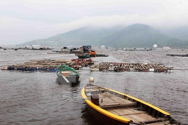 Da Nang se empena en convertirse en mayor centro de pesca de Vietnam hinh anh 1