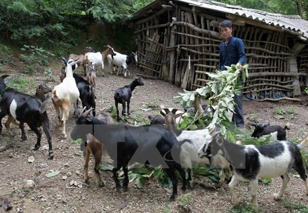 Logra Vietnam avances en reduccion de la pobreza en areas de etnias minoritarias hinh anh 1