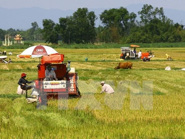 Vietnam se esfuerza por modernizacion rural y reestructuracion agricola hinh anh 1