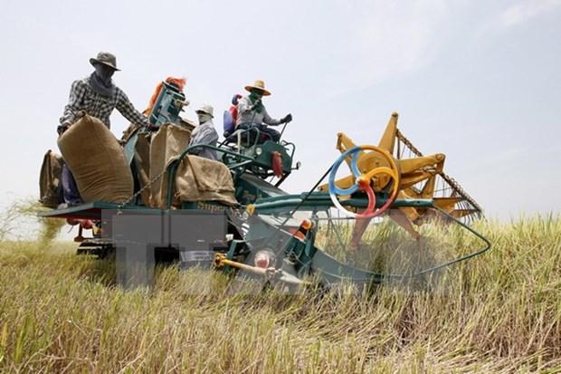 Tailandia emite apoyo financiero para los pobres hinh anh 1