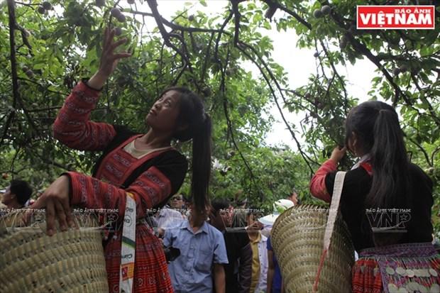 Fiesta de la cosecha de ciruelas en Moc Chau hinh anh 6