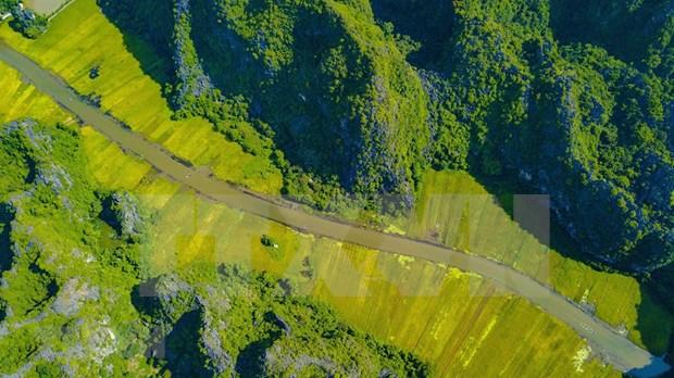 [Foto] Belleza de la temporada de cosecha de arroz en Ninh Binh hinh anh 1
