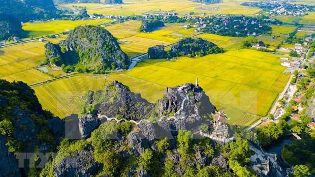 [Foto] Belleza de la temporada de cosecha de arroz en Ninh Binh hinh anh 2