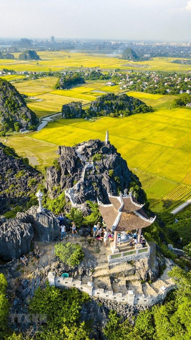 [Foto] Belleza de la temporada de cosecha de arroz en Ninh Binh hinh anh 3